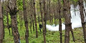 森林病虫灾害监测